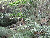 大屯溪古道 2011-2-7:IMG_8188.JPG