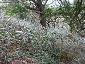 大屯溪古道 2011-2-7:IMG_8177.JPG