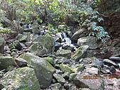 大屯溪古道 2011-2-7:IMG_8158.JPG
