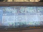 大屯溪古道 2011-2-7:IMG_8137.JPG