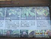 大屯溪古道 2011-2-7:IMG_8138.JPG