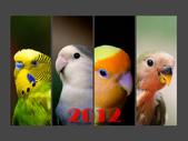 2012 小鸚月曆桌面:00-封面-誰與爭鋒
