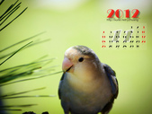 2012 小鸚月曆桌面:11-思