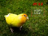 2012 小鸚月曆桌面:12-來,笑一個!