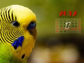 2012 小鸚月曆桌面:01-眼中的依戀