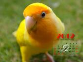 2012 小鸚月曆桌面:02-你在看我嗎?
