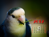 2012 小鸚月曆桌面:03-舞