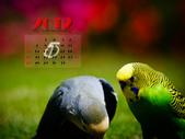2012 小鸚月曆桌面:05-私語
