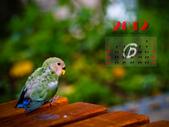2012 小鸚月曆桌面:06-回眸