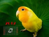 2012 小鸚月曆桌面:08-蓮之精靈
