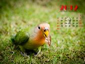 2012 小鸚月曆桌面:09-我餓了